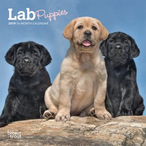 Lab Puppies 2019 7 x 7 Inch Monthly Mini Wall Calendar