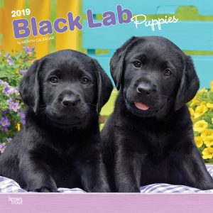 Black Labrador Retriever Puppies 2019 12 x 12 Inch Monthly Square Wall Calendar