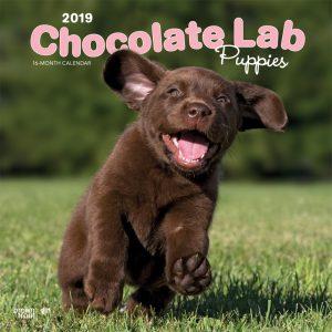 Chocolate Labrador Retriever Puppies 2019 12 x 12 Inch Monthly Square Wall Calendar