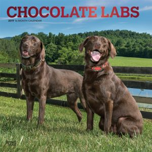 Chocolate Labrador Retrievers 2019 12 x 12 Inch Monthly Square Wall Calendar with Foil Stamped Cover