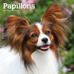 Papillons 2019 12 x 12 Inch Monthly Square Wall Calendar