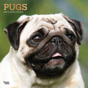 Pugs 2019 12 x 12 Inch Monthly Square Wall Calendar with Foil Stamped Cover