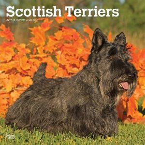 Scottish Terriers 2019 12 x 12 Inch Monthly Square Wall Calendar
