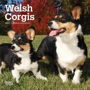 Welsh Corgis 2019 7 x 7 Inch Monthly Mini Wall Calendar