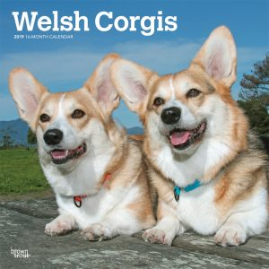 Welsh Corgis 2019 12 x 12 Inch Monthly Square Wall Calendar