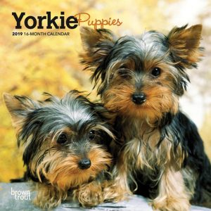 Yorkie Puppies 2019 7 x 7 Inch Monthly Mini Wall Calendar