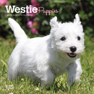 West Highland White Terrier Puppies 2019 7 x 7 Inch Monthly Mini Wall Calendar