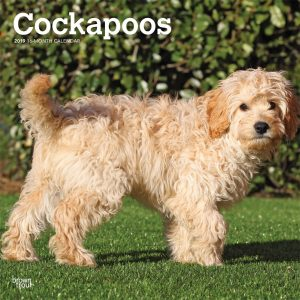 Cockapoos 2019 12 x 12 Inch Monthly Square Wall Calendar