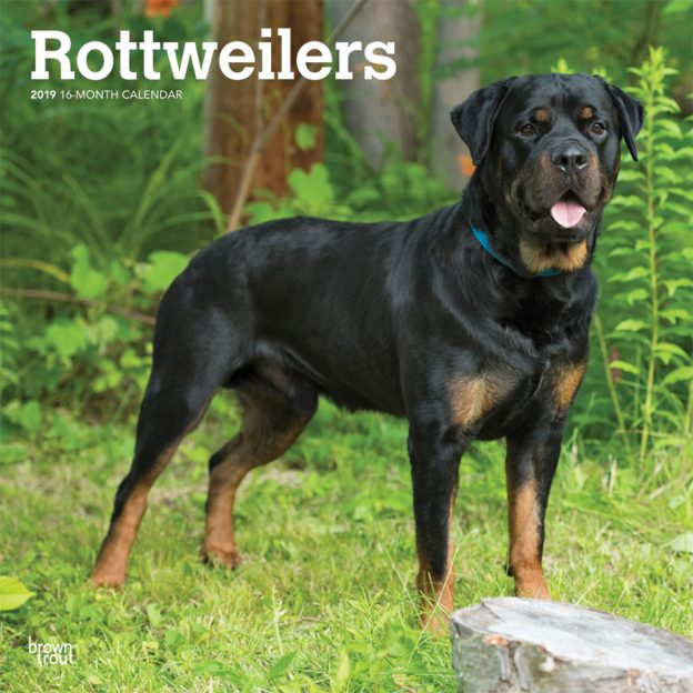 Rottweilers 2019 12 x 12 Inch Monthly Square Wall Calendar