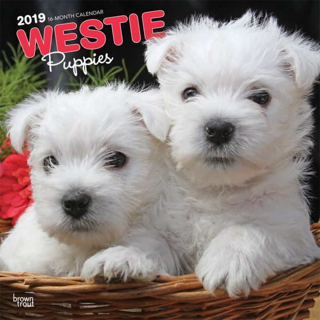 West Highland White Terrier Puppies 2019 12 x 12 Inch Monthly Square Wall Calendar