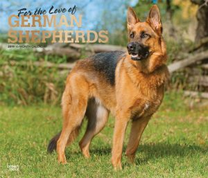 For the Love of German Shepherds 2019 14 x 12 Inch Monthly Deluxe Wall Calendar with Foil Stamped Cover