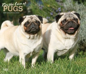 For the Love of Pugs 2019 14 x 12 Inch Monthly Deluxe Wall Calendar with Foil Stamped Cover