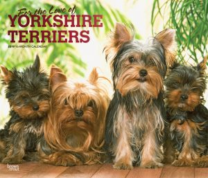 For the Love of Yorkshire Terriers 2019 14 x 12 Inch Monthly Deluxe Wall Calendar with Foil Stamped Cover