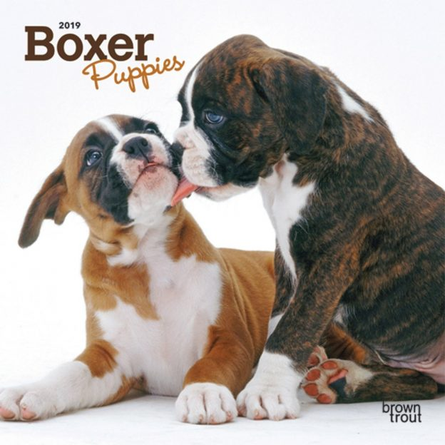 Boxer Puppies 2019 7 x 7 Inch Monthly Mini Wall Calendar, Animals Dog Breeds Puppies