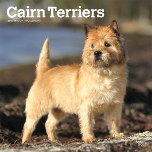 Cairn Terriers 2019 12 x 12 Inch Monthly Square Wall Calendar