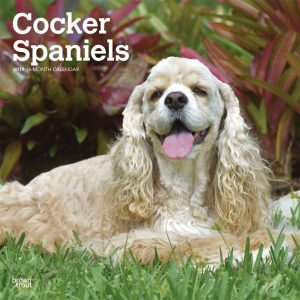 Cocker Spaniels 2019 12 x 12 Inch Monthly Square Wall Calendar