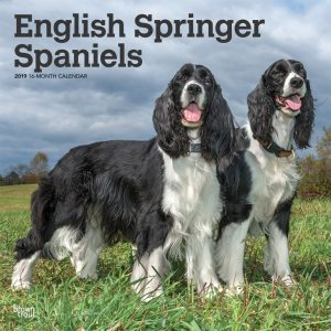 English Springer Spaniels 2019 12 x 12 Inch Square Wall Calendar