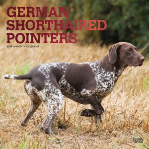 German Shorthaired Pointers 2019 12 x 12 Inch Monthly Square Wall Calendar with Foil Stamped Cover
