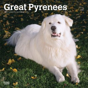 Great Pyrenees 2019 12 x 12 Inch Monthly Square Wall Calendar
