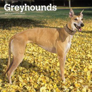 Greyhounds 2019 12 x 12 Inch Monthly Square Wall Calendarv