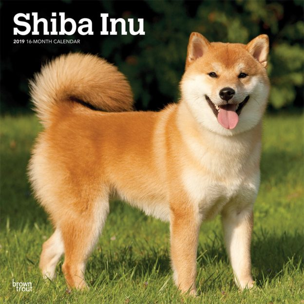 Shiba Inu 2019 12 x 12 Inch Monthly Square Wall Calendar