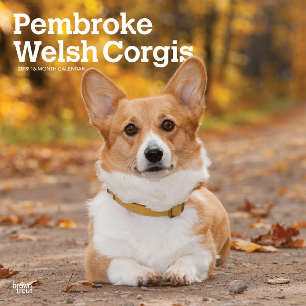 Pembroke Welsh Corgis 2019 12 x 12 Inch Monthly Square Wall Calendar