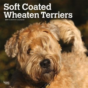 Soft Coated Wheaten Terriers 2019 12 x 12 Inch Monthly Square Wall Calendar