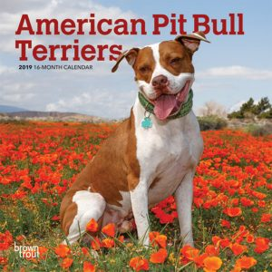American Pit Bull Terriers 2019 7 x 7 Inch Monthly Mini Wall Calendar