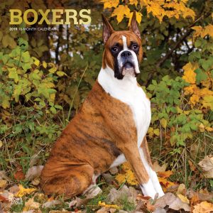 Boxers 2019 12 x 12 Inch Monthly Square Wall Calendar with Foil Stamped Cover