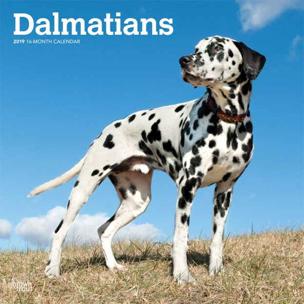 Dalmatians 2019 12 x 12 Inch Monthly Square Wall Calendar