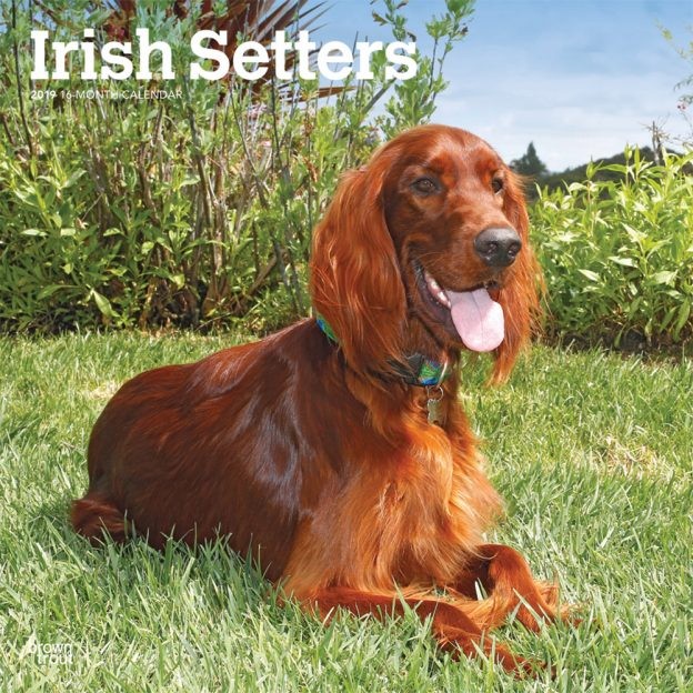 Irish Setters 2019 12 x 12 Inch Monthly Square Wall Calendar