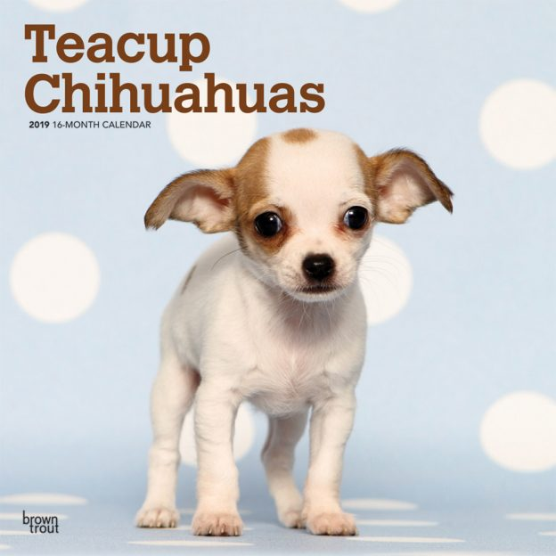 Teacup Chihuahuas 2019 12 x 12 Inch Monthly Square Wall Calendar