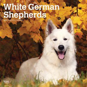 White German Shepherds 2019 12 x 12 Inch Monthly Square Wall Calendar