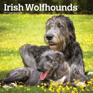 Irish Wolfhounds 2019 12 x 12 Inch Monthly Square Wall Calendar
