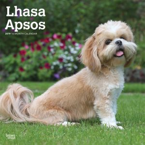 Lhasa Apsos 2019 12 x 12 Inch Monthly Square Wall Calendar