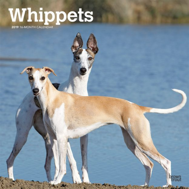 Whippets 2019 12 x 12 Inch Monthly Square Wall Calendar