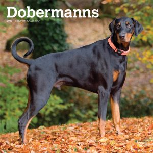 Dobermanns International Edition 2019 12 x 12 Inch Monthly Square Wall Calendar