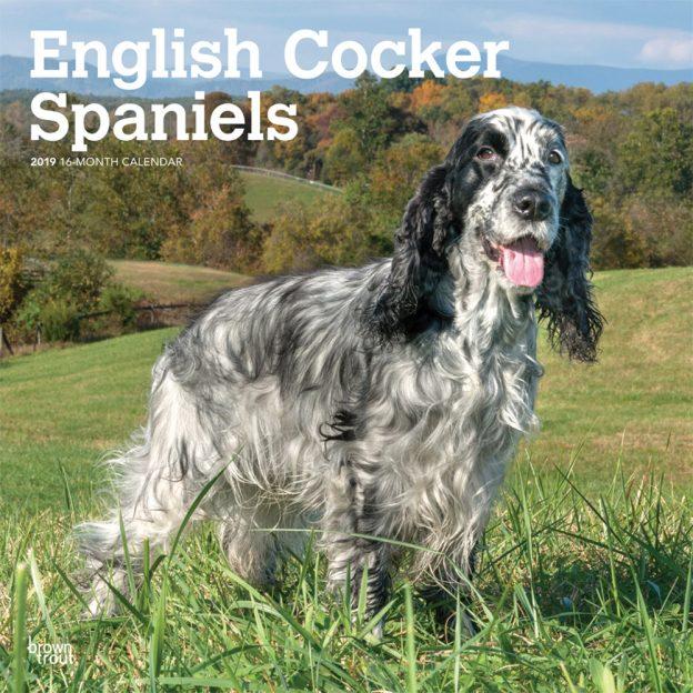 English Cocker Spaniels 2019 12 x 12 Inch Monthly Square Wall Calendar