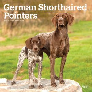 German Shorthaired Pointers International Edition 2019 12 x 12 Inch Monthly Square Wall Calendar