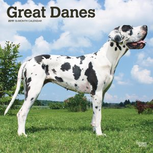 Great Danes International Edition 2019 12 x 12 Inch Monthly Square Wall Calendar