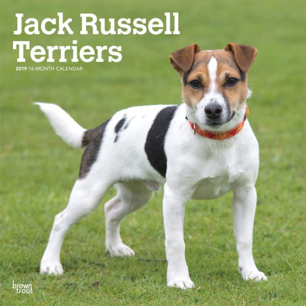 Jack Russell Terriers International Edition 2019 12 x 12 Inch Monthly Square Wall Calendar