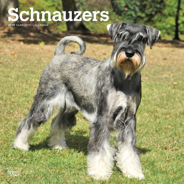 Schnauzers International Edition 2019 12 x 12 Inch Monthly Square Wall Calendar, Animals Dog Breeds