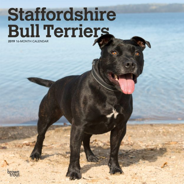 Staffordshire Bull Terriers 2019 12 x 12 Inch Monthly Square Wall Calendar