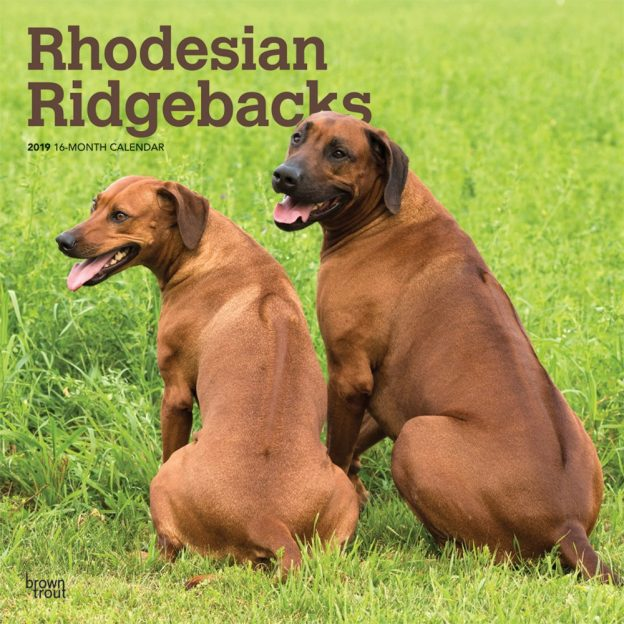 Rhodesian Ridgebacks 2019 12 x 12 Inch Monthly Square Wall Calendar, Animals Dog Breeds