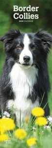 Border Collies 2020 6.75 x 16.5 Inch Monthly Slimline Wall Calendar, Animals Dog Breeds Collies