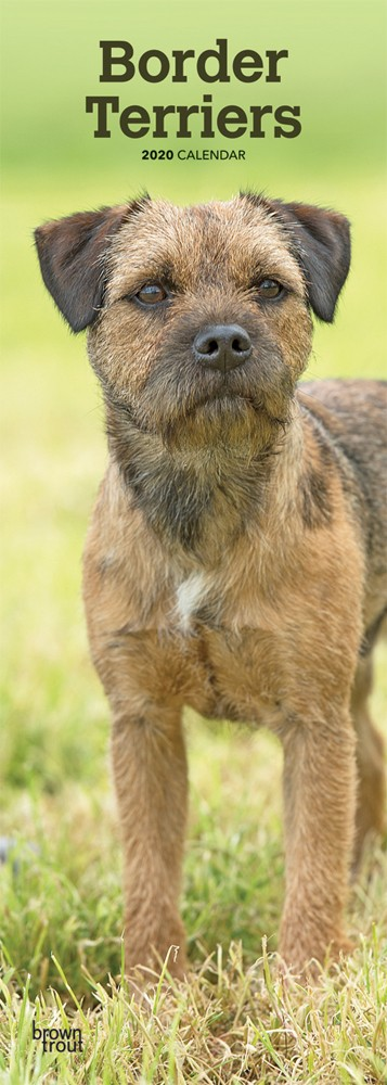 Border Terriers 2020 6.75 x 16.5 Inch Monthly Slimline Wall Calendar, Animals Dog Breeds Terriers