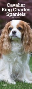 Cavalier King Charles Spaniels 2020 6.75 x 16.5 Inch Monthly Slimline Wall Calendar, Dog Canine