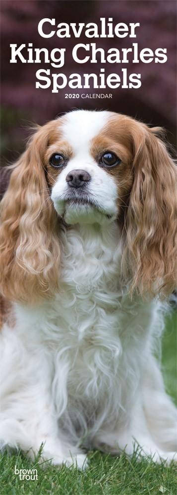 Cavalier King Charles Spaniels 2020 6.75 x 16.5 Inch Monthly Slimline Wall Calendar, Dog Canine