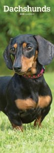 Dachshunds 2020 6.75 x 16.5 Inch Monthly Slimline Wall Calendar, Dog Canine