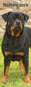 Rottweilers 2020 6.75 x 16.5 Inch Monthly Slimline Wall Calendar, Dog Canine Rott